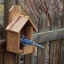 One Board Birdhouse/Feeder