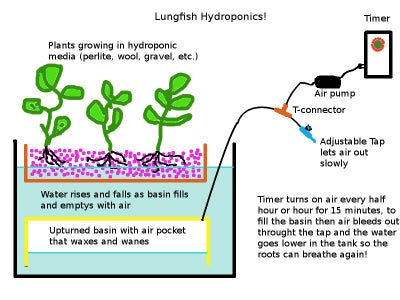 """Modular """"Lungfish"""" Ebb and Flow Hydroponics or Aquaponics Systems.  Easier?"""