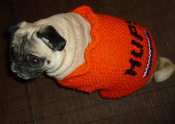 Easiest Custom Knit  Dog Sweater Ever.