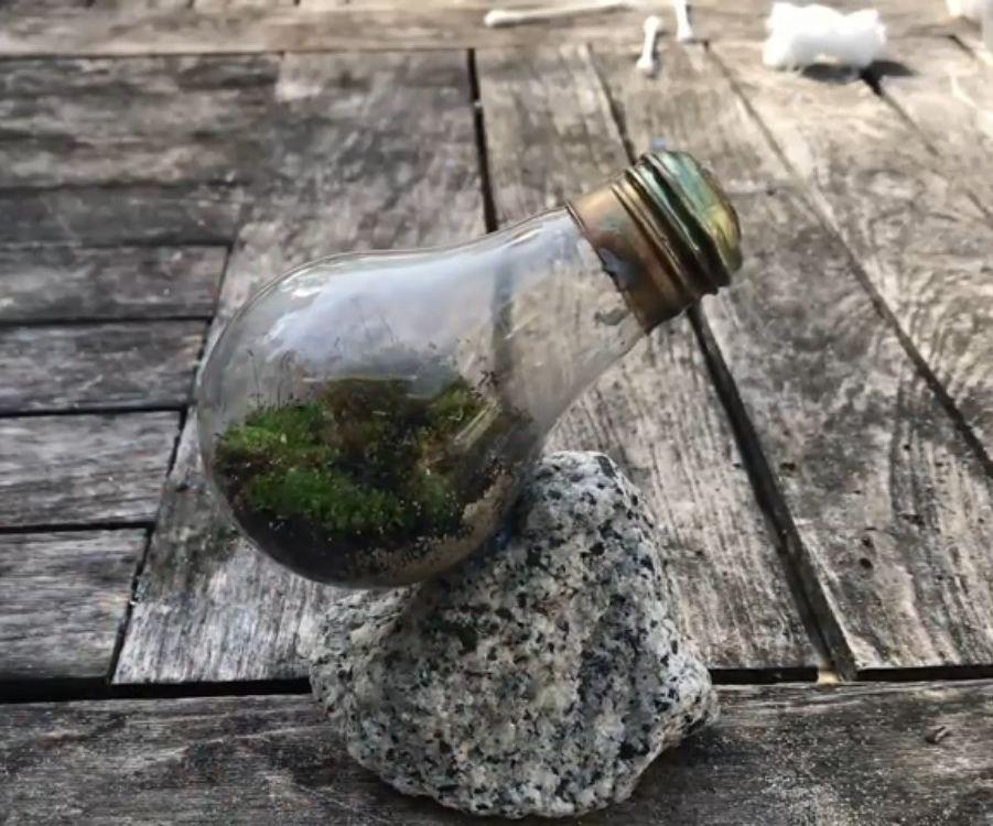 Make a Lightbulb Terrarium