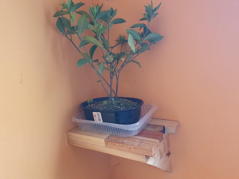 Un Árbol, Una Maceta Y Un Estante (A Tree, a Pot and a Shelf)