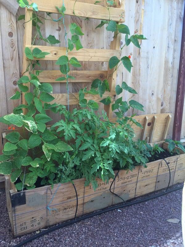 Ammo Boxes Turned Vegetable Garden