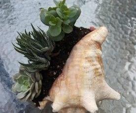 如何使用贝壳作为播种机