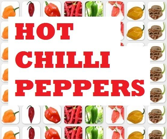 16 Tips on Growing Hot Chilli Peppers in a Cold Climate