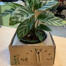 Arduino Plant Monitoring Box