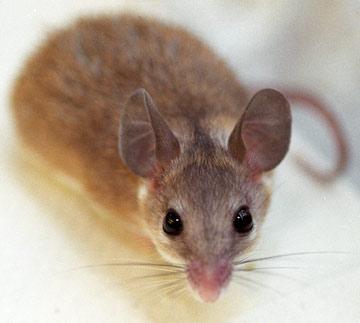 Simple 'No-Kill' Mouse Trap