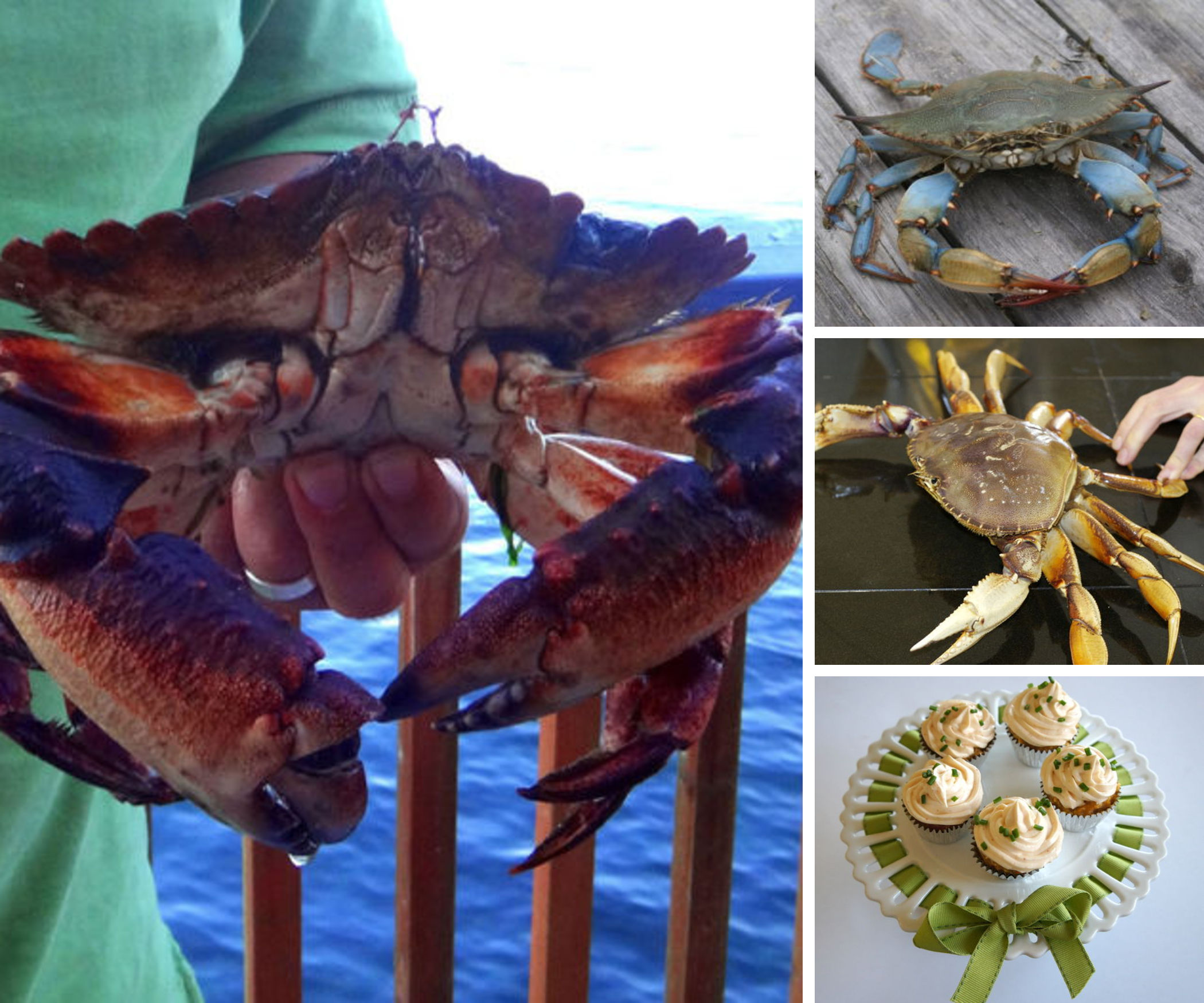 Catching and Cooking Crab