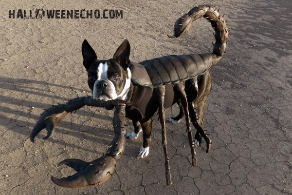 Echo the Scorpion