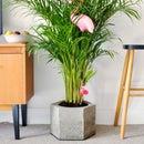 Concrete Hexagon Plant Pot