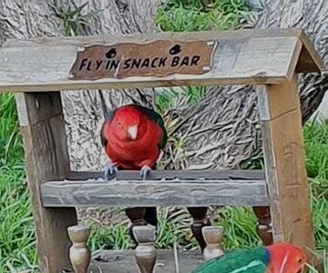 如何制作鸟类饲养栏