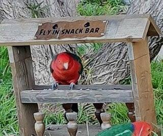 How to Make a Bird Feeder Bar