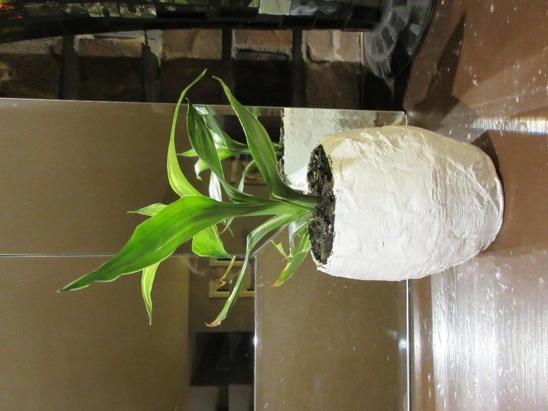 Fancy Paper Pots