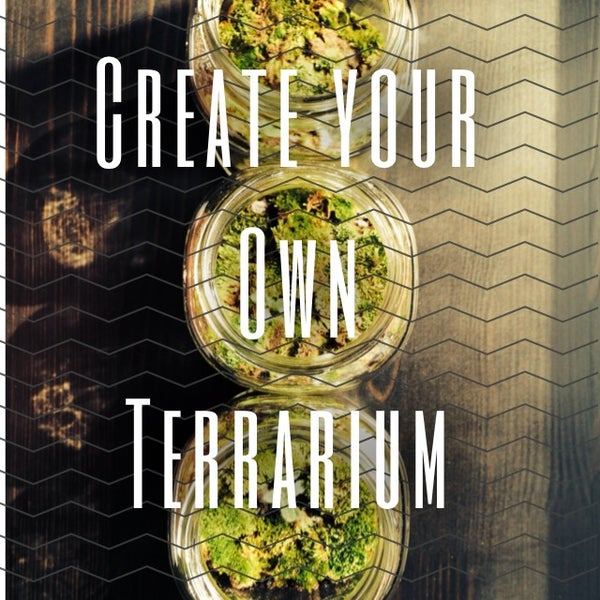 Create Your Own Terrarium