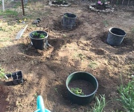 Gopher-Proof Tomatoes