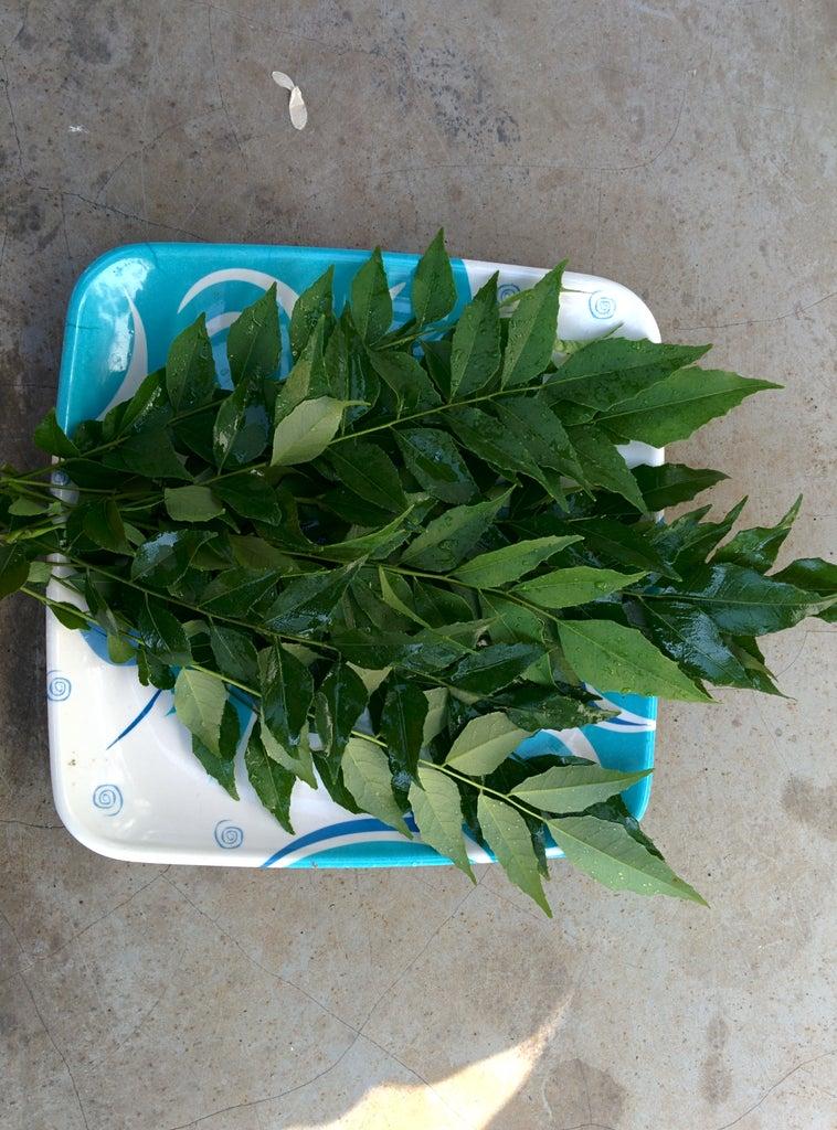 Kari Patte ( Curry Leaf ):