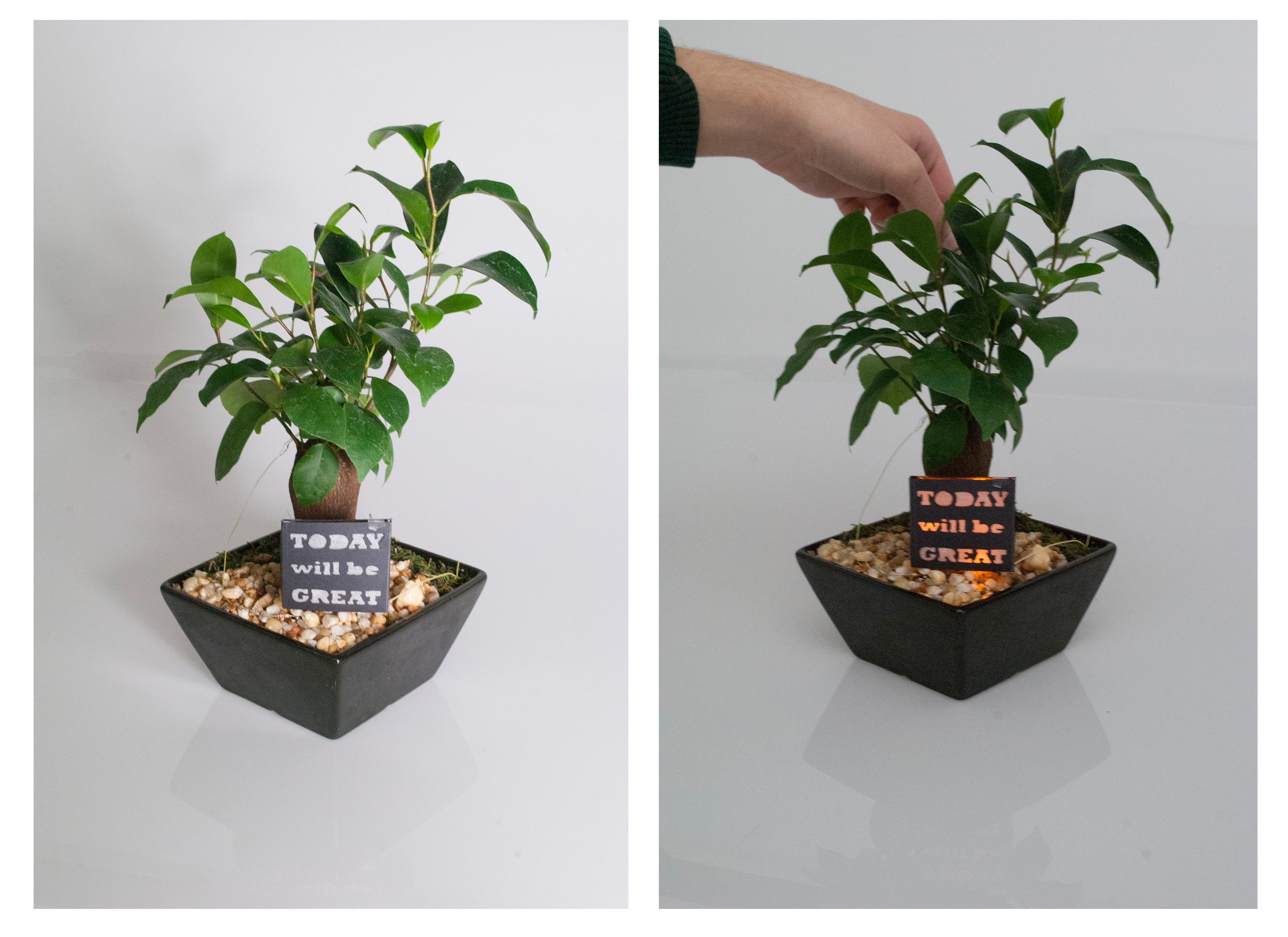 Positivity Plant