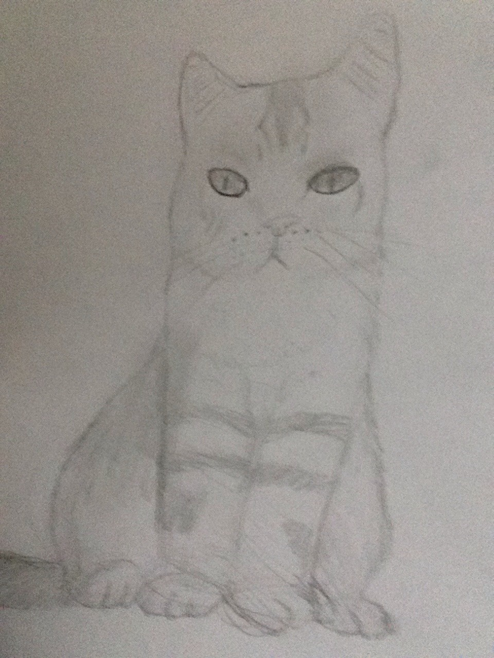 Drawing Kitties!!!