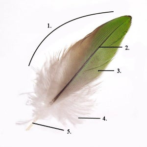 Cut Hackle and Wire