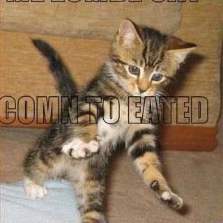 lolz cat.jpg