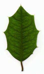 Optional: Add Leaves