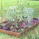 Garden Fertilizer With Coffee.