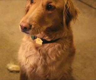 Low Profile Pet Collar