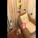 Cat bouncing toy
