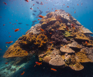 How to Save Coral Reefs Using 3D Design and Printing