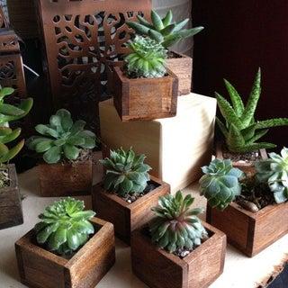 739f8e0a97ab0905628d09b53985085d--succulent-gifts-succulent-plants.jpg
