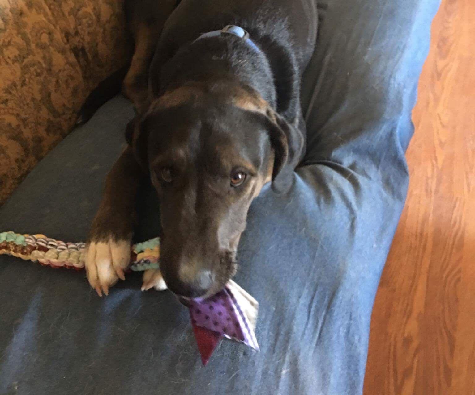 Dog Chew Toy
