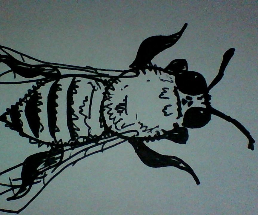 BEE-ing Artistic!