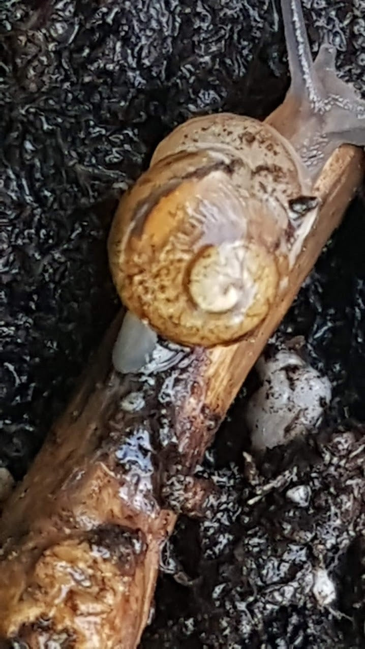 Step Two: Feeding Your Snail!