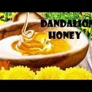 DIY: How to make DANDELION HONEY (great old recipe)