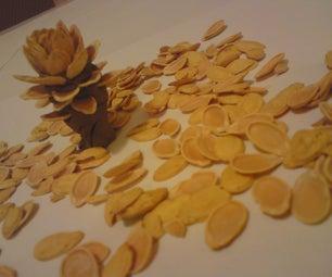 Seed Tree or Flower