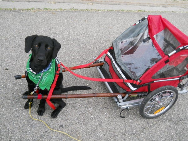DIY Dog Pull Cart Made Out of a Folding Bicycle Trailer.