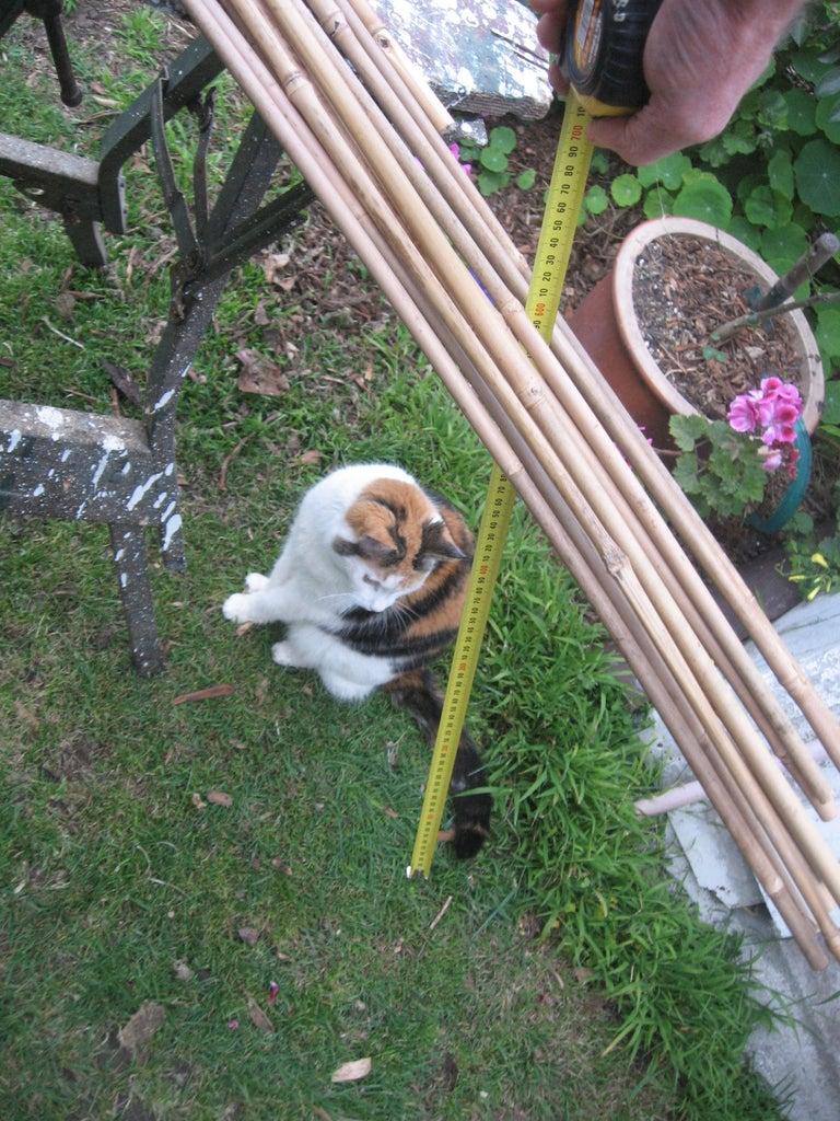 Bamboo Strut Selection