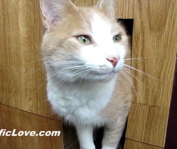 Building a Winter Cat House - DIY Pets