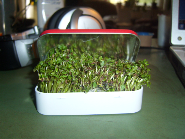 Altoids Tin Mini Garden