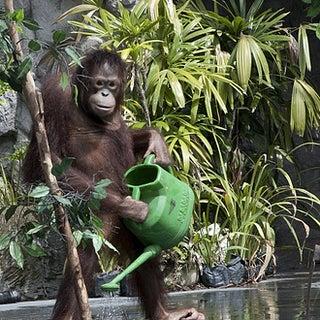 monkey_watering_plants.jpg