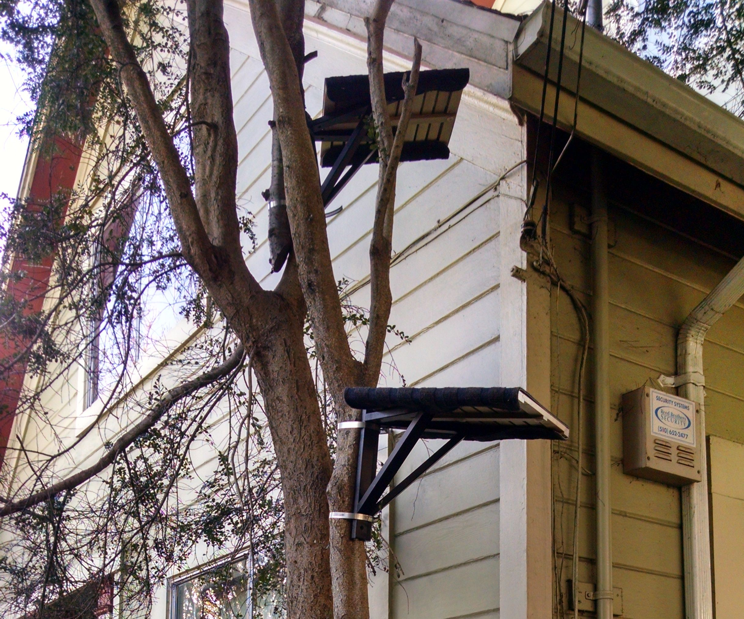 How to Turn a Real Live Tree into a Cat Tree w/Hose Clamps and Ikea Shelving