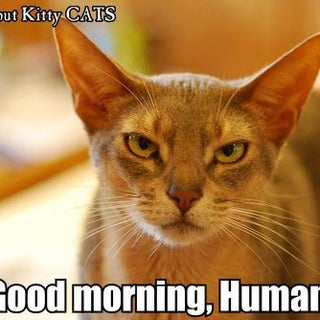 MORNING HUMAN.jpg