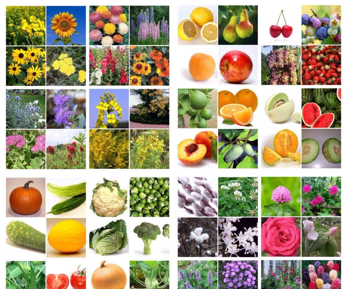 How to plan three seasons of bee friendly plants